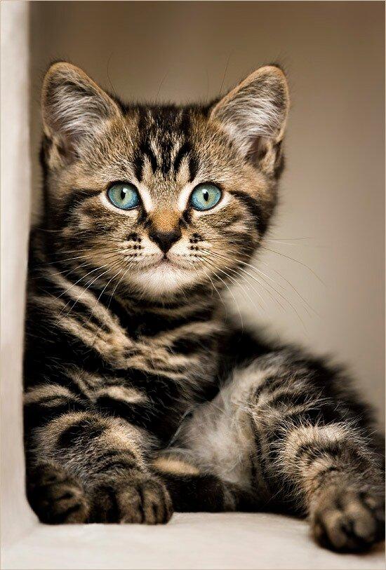 Котята фотографа Jana Weichelt