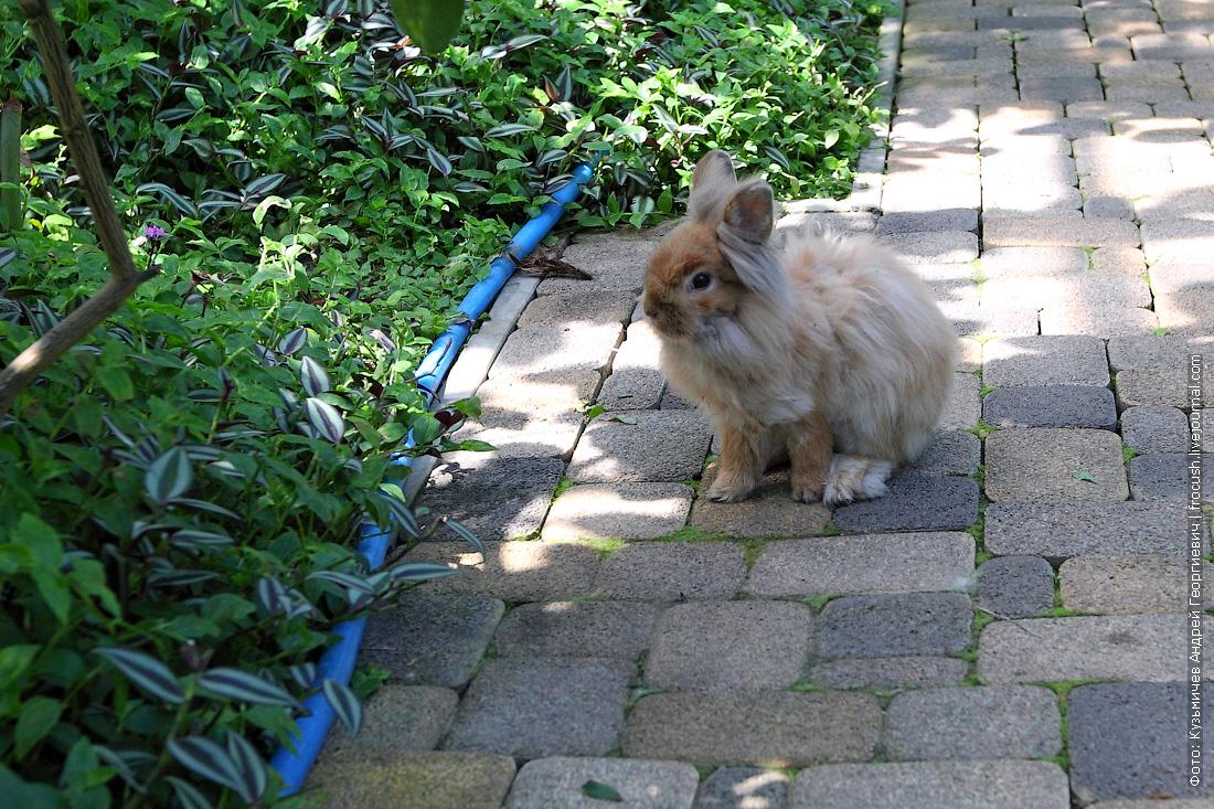кролик в саратовском лимонарии