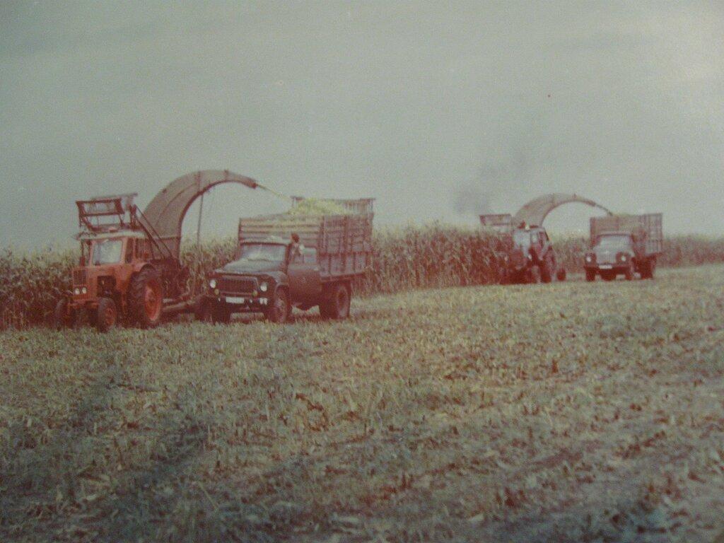 сельское хозяйство в ссср фото чиновники администрации