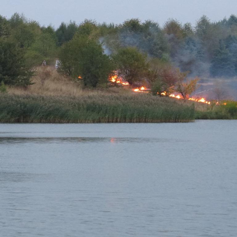 На Цнянке выгорела трава из-за непотушенного костра