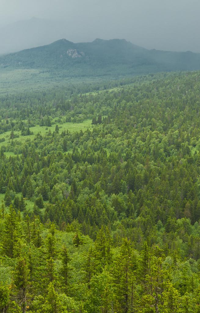 13. Тайга в горах Башкортостана. Вид с горы Ялангас на Малиновую