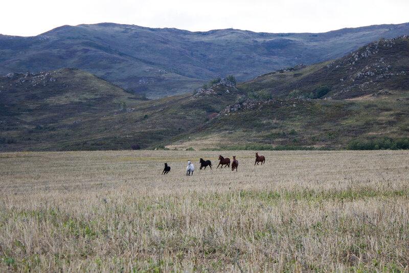лошадки бегают по полю вечером