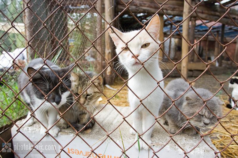 новости  Приют для бездомных животных «СИРИУС»