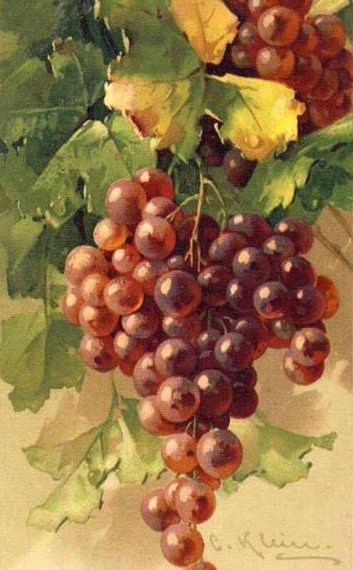 К. Кляйн. 13. Виноград.
