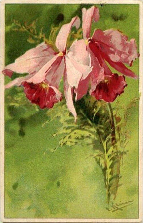 К. Кляйн. 42.  Орхидеи.
