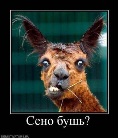 img-fotki.yandex.ru/get/5201/stariy2003.b6/0_5a7f6_e906f710_L.jpg