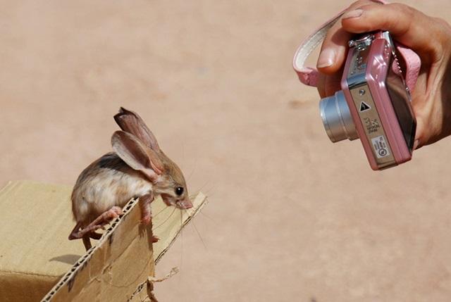 Забавные фото: самые редкие и милые животные планеты