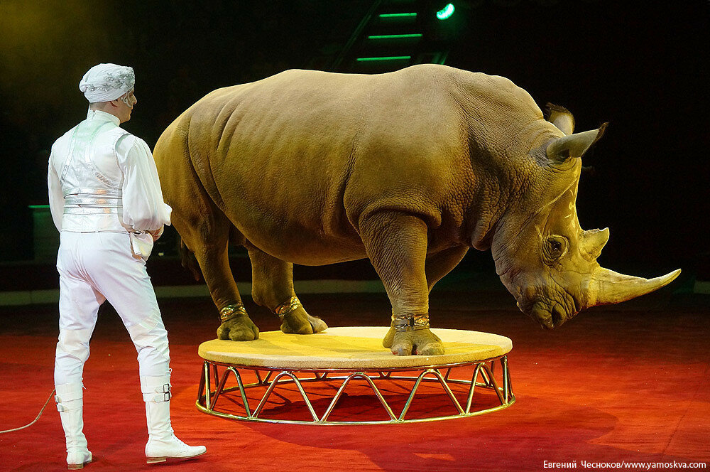 Осень. Цирк Никулина. Носорог. 22.10.15.09..jpg