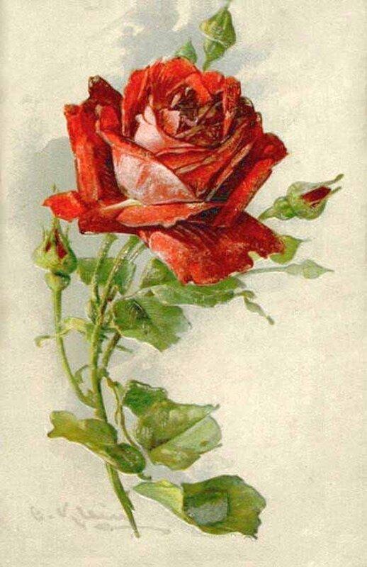 К. Кляйн. 153. Красная роза.