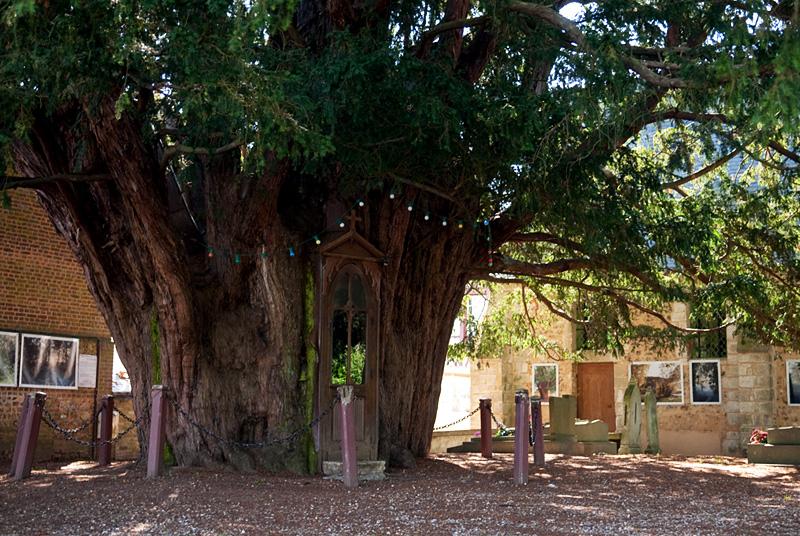La Haye-de-Routot, часовня в 1300 летнем тисовом дереве