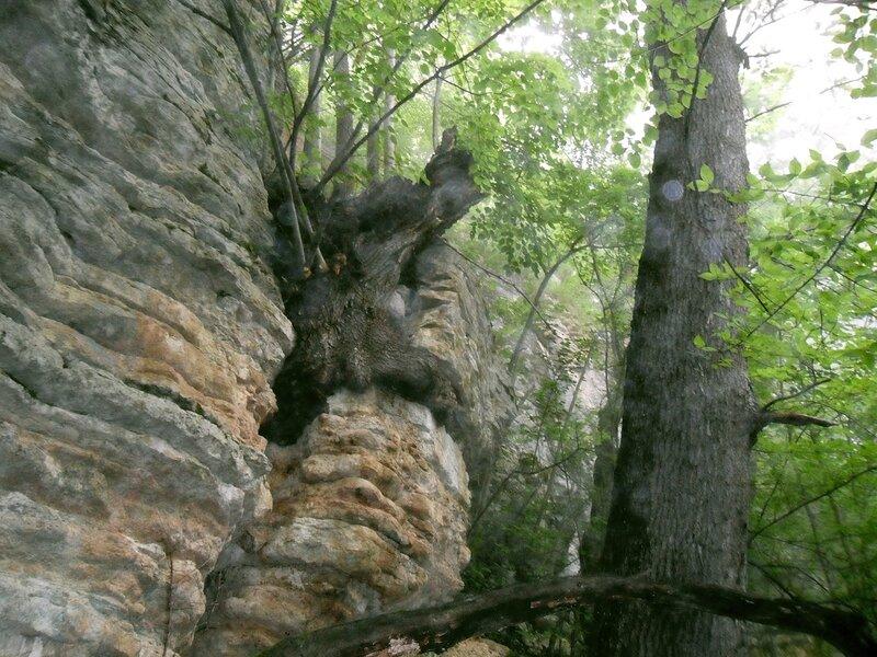 Дерево и камень...