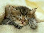 Спи,маленький...