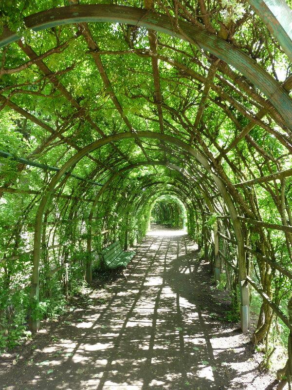 Зеленая галерея в Собственном саду