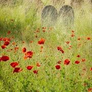 Приметы похороны
