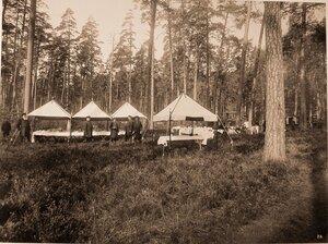 Повара и прислуга за приготовлением обеда в лесу для участников охоты - членов императорской фамилии и гостей.