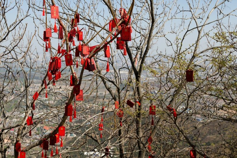 Деревья с желаниями, парк Сяншань, Пекин