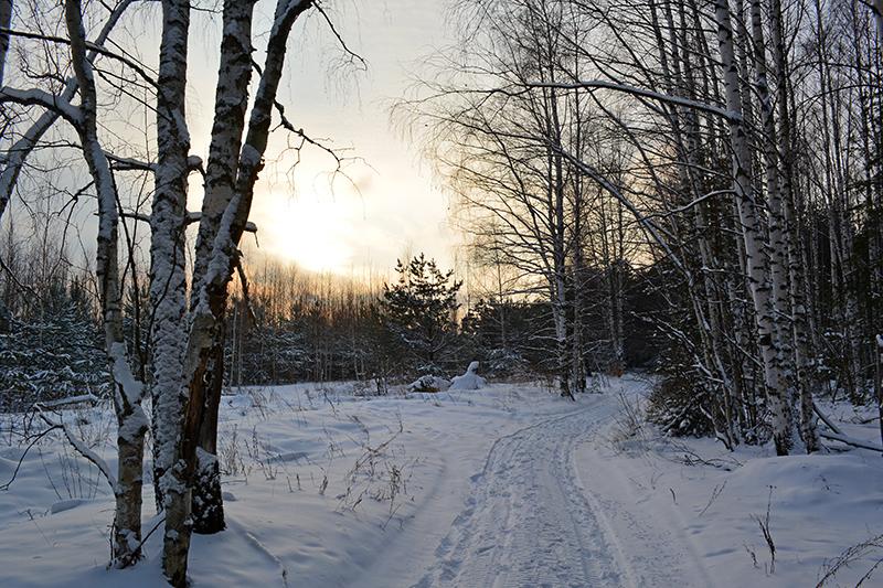 зимний лес 9