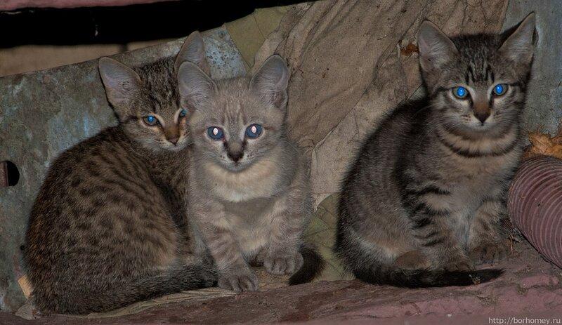 фотография котят