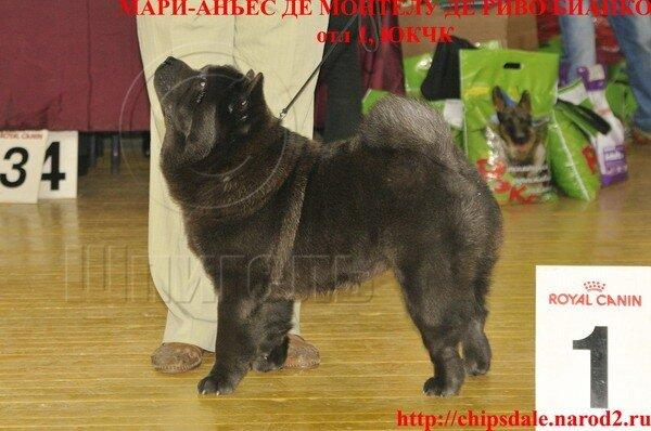 моно чау-чау Брянск