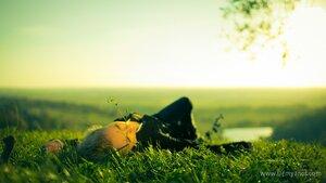 травинка портрет, свет, девушка