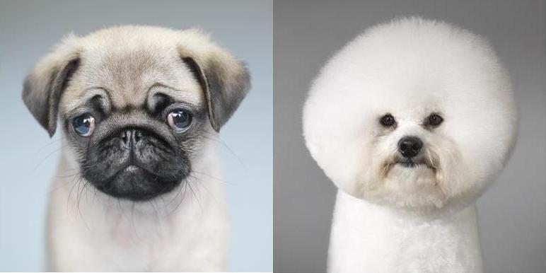 Собаки от Тима Флака (Tim Flach)