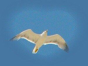 Крылья © Алексей Донской