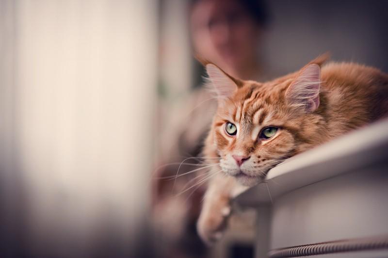 2. Вопрос: как отучить кота от этой привычки? Были перепробованы: — липкие ленты, разложенные на спи
