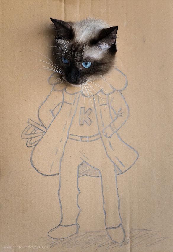 Фото 19. Портрет кошки при натуральном свете (камера Nikon D610 со светосильным объективом Nikkor 24-70/2.8. 1000, 62, 4.0, 1/500)