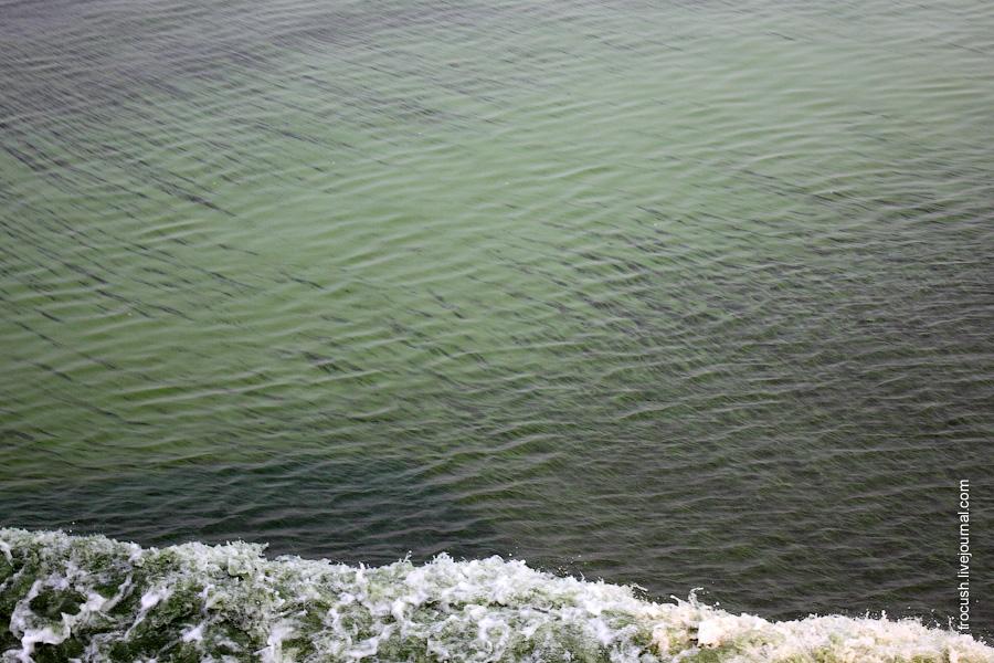 Цветущее Куйбышевское водохранилище