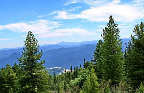 Кедровый лес