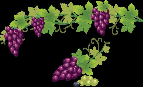 виноград (13).png