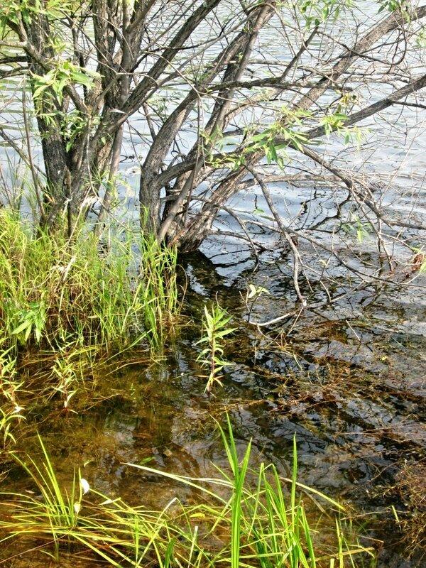 август. логово скорпиона
