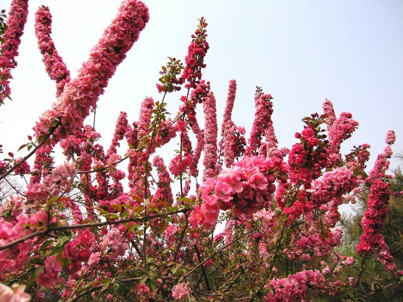 Китай, Пекин, парк им.Сунь Ятсена. Экзотические растения