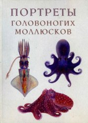 Книга Атлас прижизненных окрасок головоногих моллюсков (портреты головоногих моллюсков)