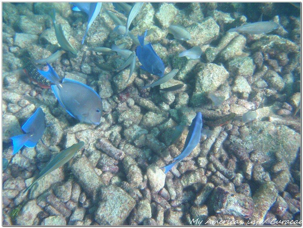 подводный мир кюрасао