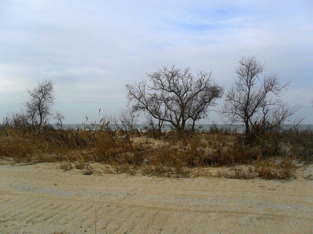 Зима, деревья у моря ... SAM_5556.JPG
