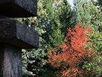 Осень в японском садике Москвы