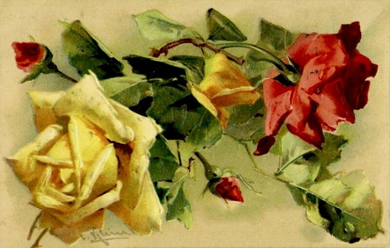 К. Кляйн. 50. Розы.