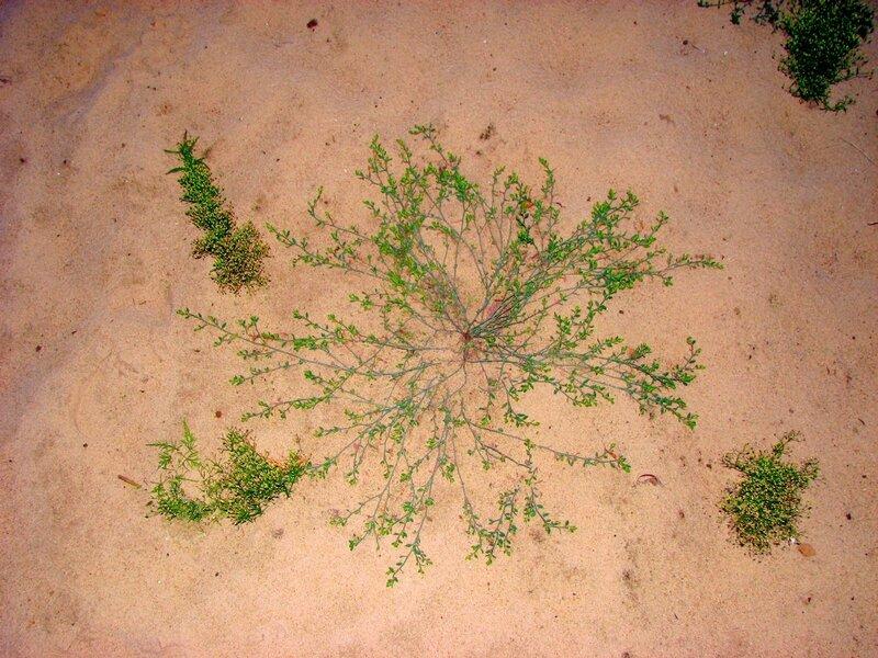 фрактальный узор на песке