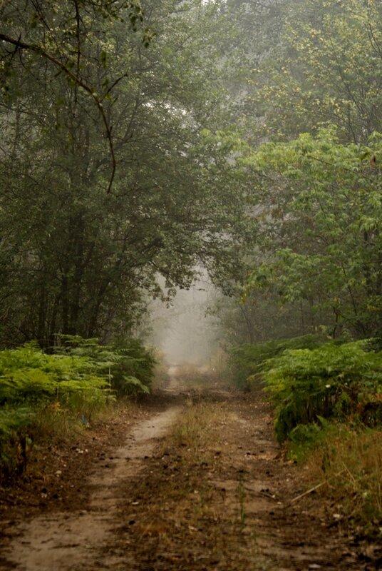 Лесная дорога