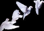Doves_in Flight1_mm.png