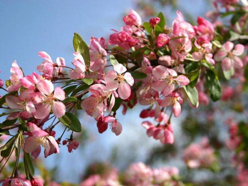 【引用】Весеннее.春天的。 - 秋林红叶 -