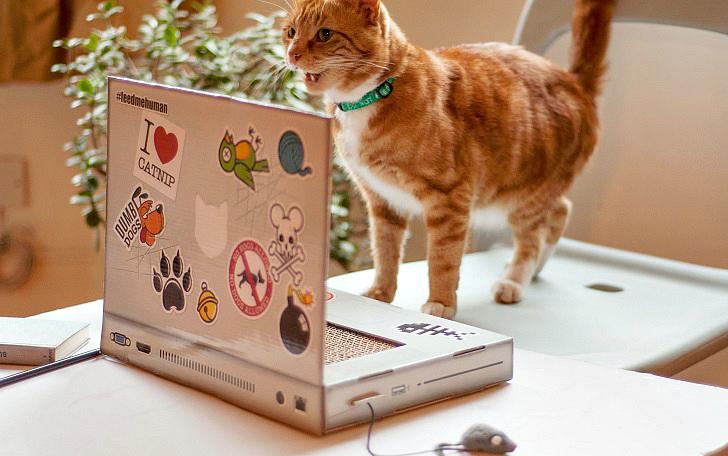 Ноутбук для котиков — то, чего вам не хватает (6 фото)