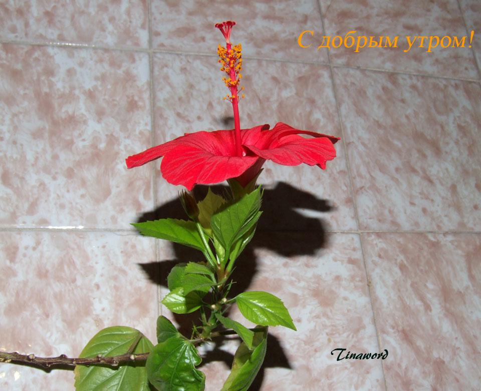 цветок-2.jpg