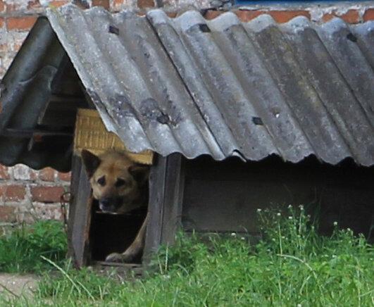 0 79472 ea9c0d6b XL Поездка в город Высокое, в Беларуси