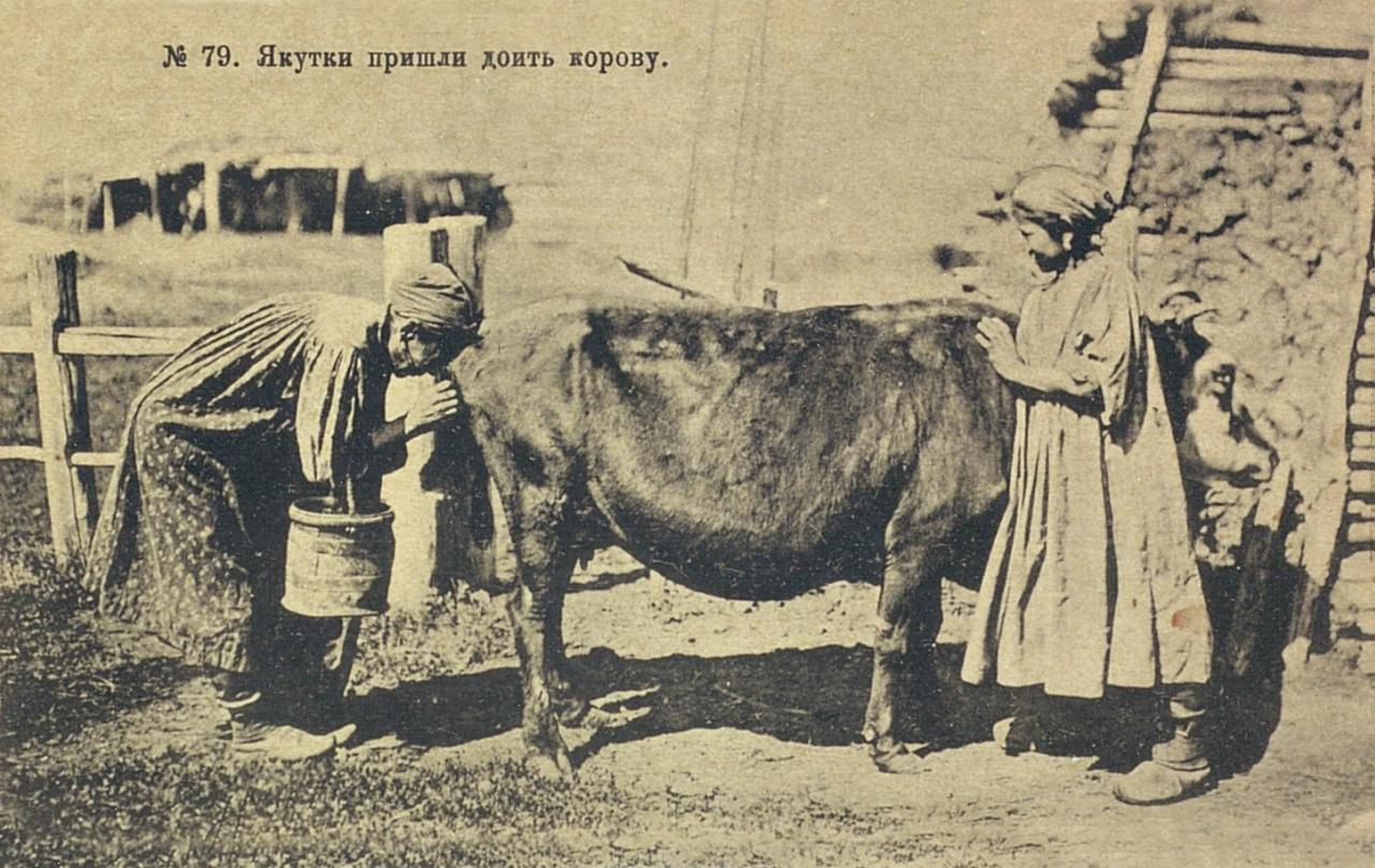 Якутки пришли доить корову