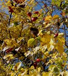 Осенний лес в Крыму
