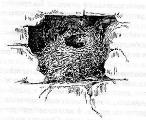 гнездо горихвостки