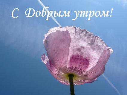 С Добрым утром! Расцветают цветы