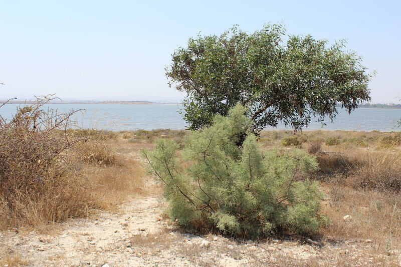 Salty Lake in Larnaca